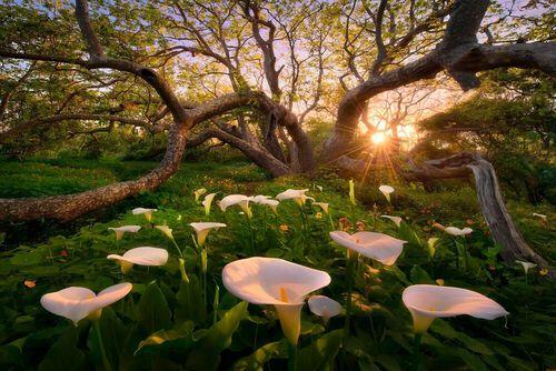 B.Hartmann, M.Adamus and P.Madsen offer us a walk in their flowery landscapes.