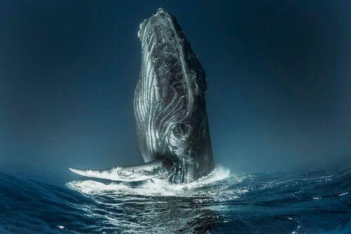 Laissez vous submerger par nos plus beaux clichés venus des profondeurs de l'océan.