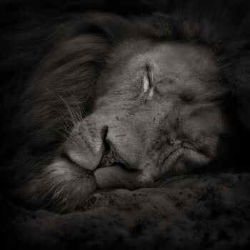 Photo Sweet Dreams - Ruud Peters