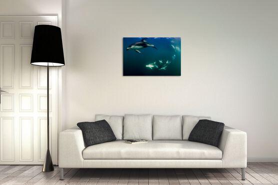 Photo Ronde des dauphins - Richard Herrmann