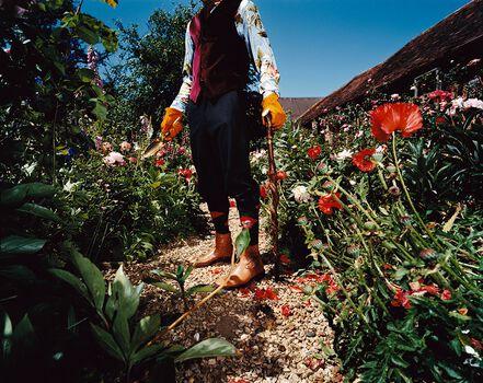 Photo Flowers - Steve Hiett
