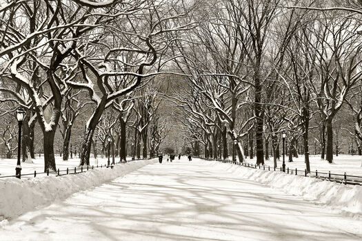 Photo Bliss-Poet's Walk Central Park - Christopher Bliss