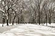 Bliss-Poet's Walk Central Park