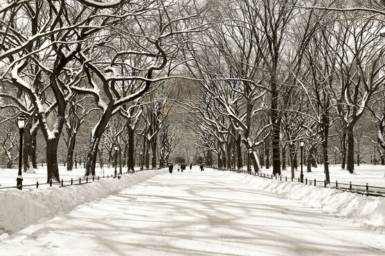 Photo Bliss-Poet's Walk Central Park - Christopher Bliss