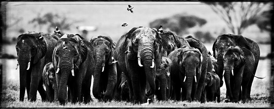 Photo Big Family - Laurent Baheux