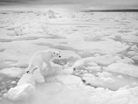 Photo LADY ON ICE PACK - Nolwenn Hadet