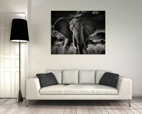 Photo Elephant curieux II - Laurent Baheux