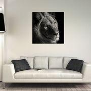 YOUNG LION II