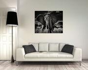 Elephant curieux II