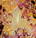 Photo Soft Coral with Goby - David Hall