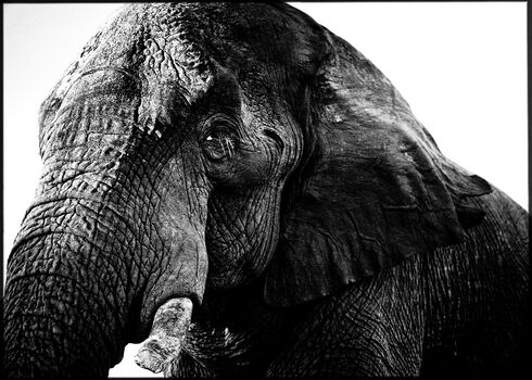 Photo The Old One - Laurent Baheux