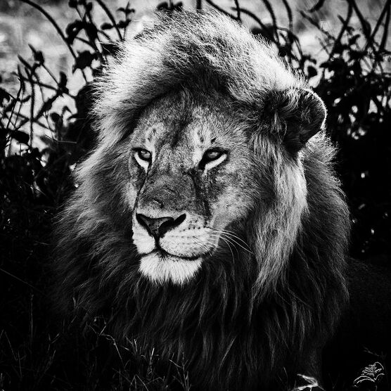 Photo LE ROI SAGE - Laurent Baheux