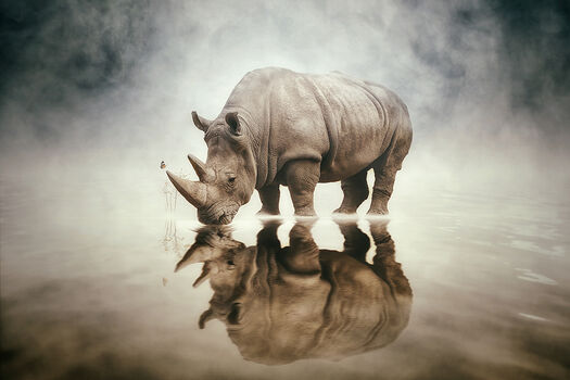 Photo RHINO - HERNANDEZ DREAMPHOGRAPHY FELIX