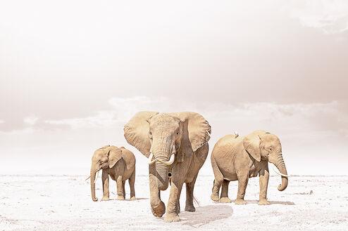 LEADING ELEPHANT