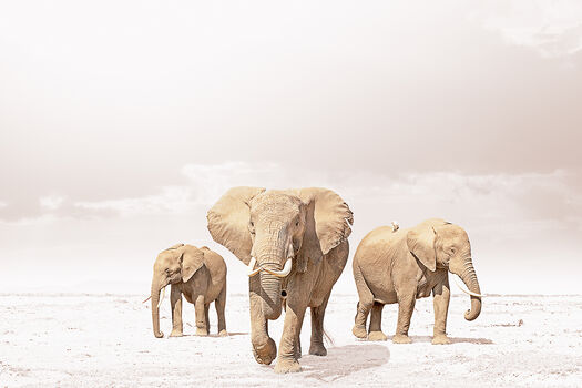 Photo LEADING ELEPHANT - Klaus Tiedge