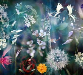 Photo Season I - LUIS MARIANO GONZALEZ