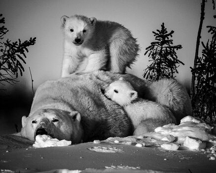 Photo LA SIESTE IMPOSSIBLE - Laurent Baheux