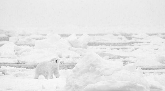 Photo UNDER THE SNOW - Nolwenn Hadet