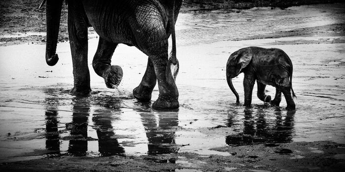 Photo Many rivers to cross, Tanzania 2015 - Laurent Baheux
