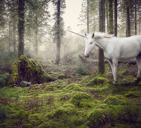 Photo THE LAST UNICORN 1 - Matt Walford
