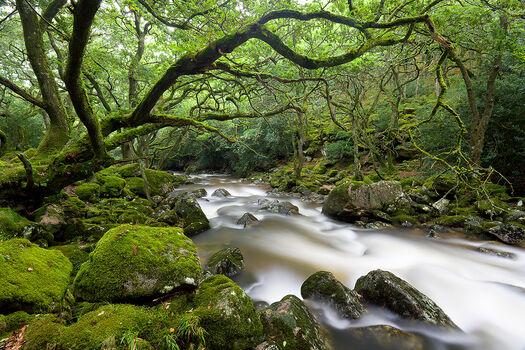 Photo Forbidden Forest - Adam Burton