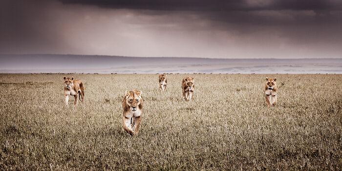 Photo ALLIANCE - Klaus Tiedge