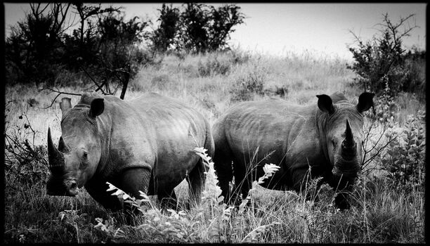 Photo Horn of Africa I - Laurent Baheux