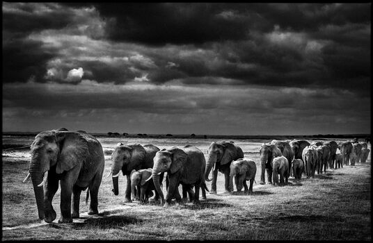 Photo Crossing the Plain I - Laurent Baheux