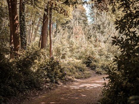Photo LIGHT IN TREES - Herod Becen