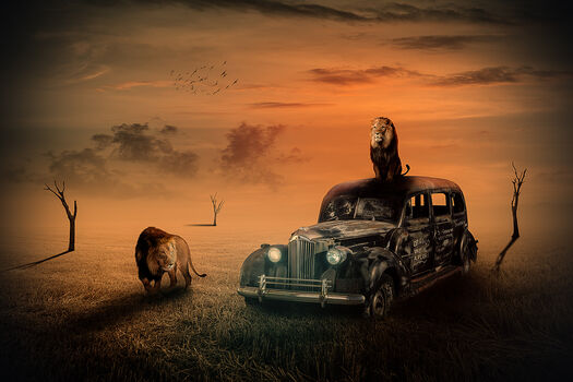 Photo THE USED CAR DEALER - Nicole Holz
