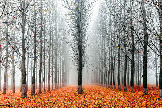 Photo First in the Line - Evgeni Dinev