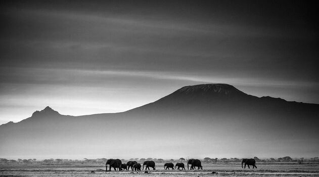 Photo Giants in front of kilimanjaro I, Kenya 2015 - Laurent Baheux