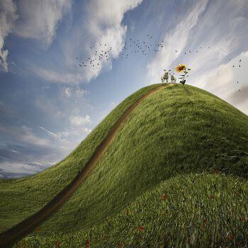 Photo Wolkenschafe - Christine Ellger