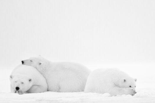 Photo SLEEPING FAMILY - Nolwenn Hadet