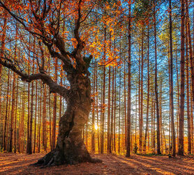 Photo The King of the Forest - Evgeni Dinev