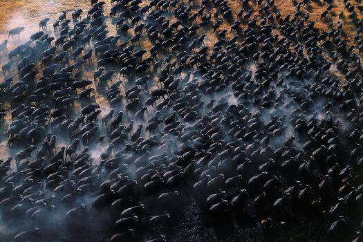 Photo Comme une mer déchainée - Patrick de Wilde