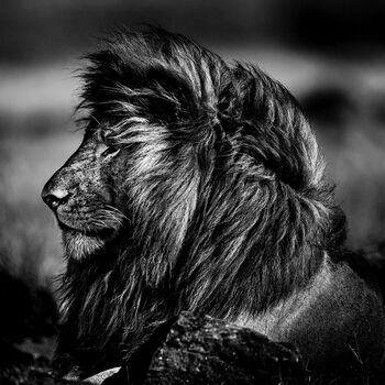 Photo SUN ON MY FACE - Laurent Baheux
