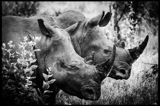 Photo Horn of Africa II - Laurent Baheux