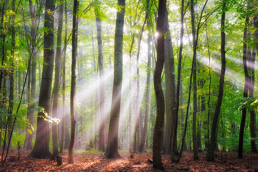Photo WHEN THE SUN SHINES ON YOUR WAY - Janek Sedlar