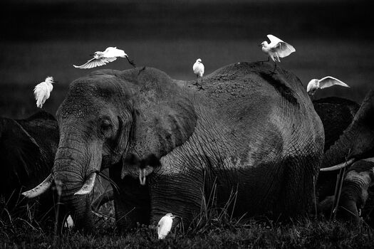 Photo Between friends, Kenya 2015 - Laurent Baheux
