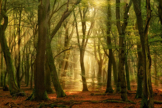 Photo THE OPEN SECRET - Lars Van de goor