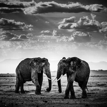 Photo THE ROAD IS CLOSED, KENYA 2015 - Laurent Baheux
