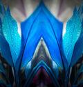 Photo Blue Arch - Nicolas Jardry