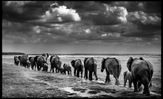 Photo Crossing the Plain II - Laurent Baheux