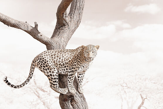 Photo ALERT LEOPARD - Klaus Tiedge