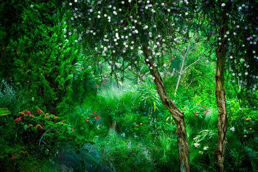 Photo Le Jardin Eden 2 - Bernhard Hartmann
