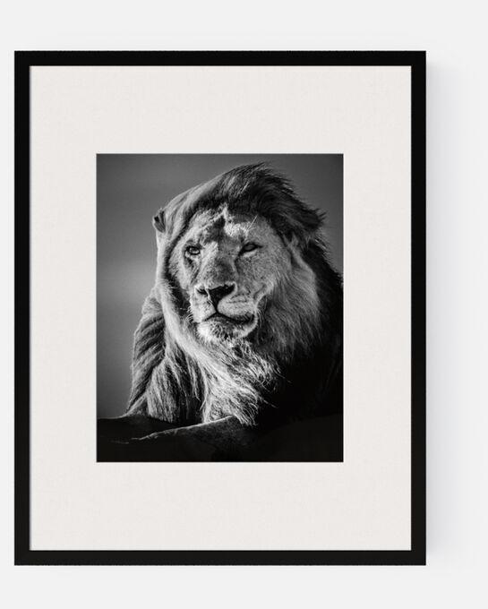 Photo Lion in the Wind V - Laurent Baheux