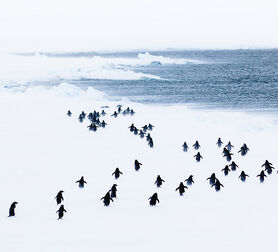 Photo WHITE STORM - ANDREW PEACOCK