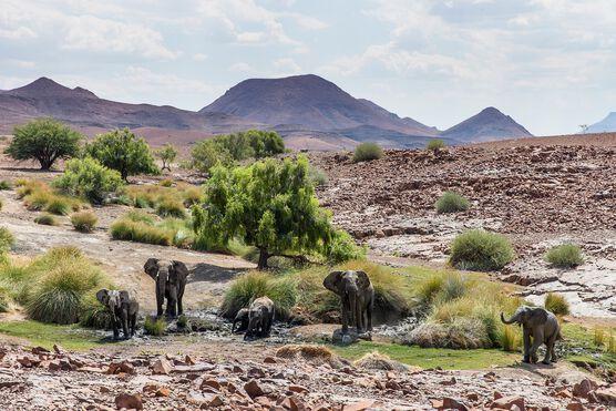 Photo Elephant Mud Bath - Michael Poliza