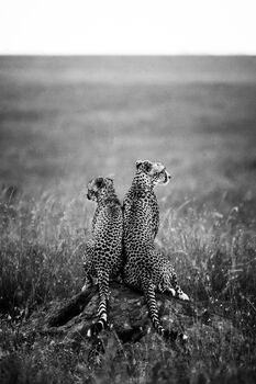 Photo FOR LIFE - Laurent Baheux